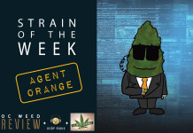 Strain of the Week: Aug. 16, 2015 (Agent Orange)