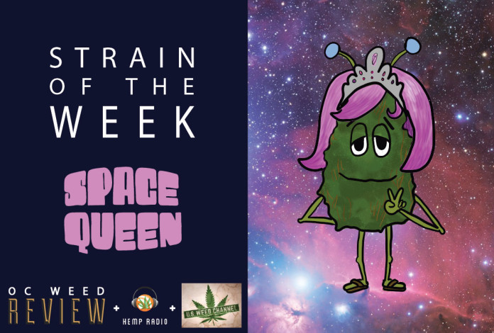 Strain of the Week: Sept. 6, 2015 (Space Queen)